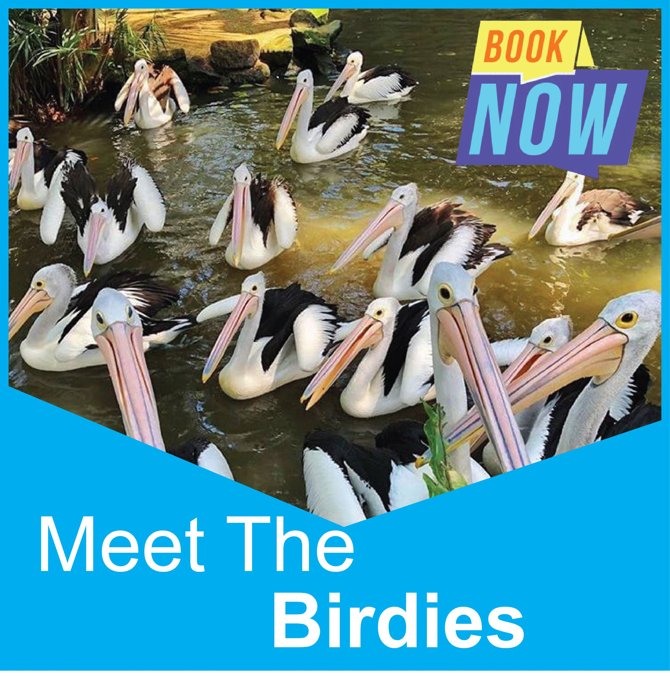 Meet The Birdies