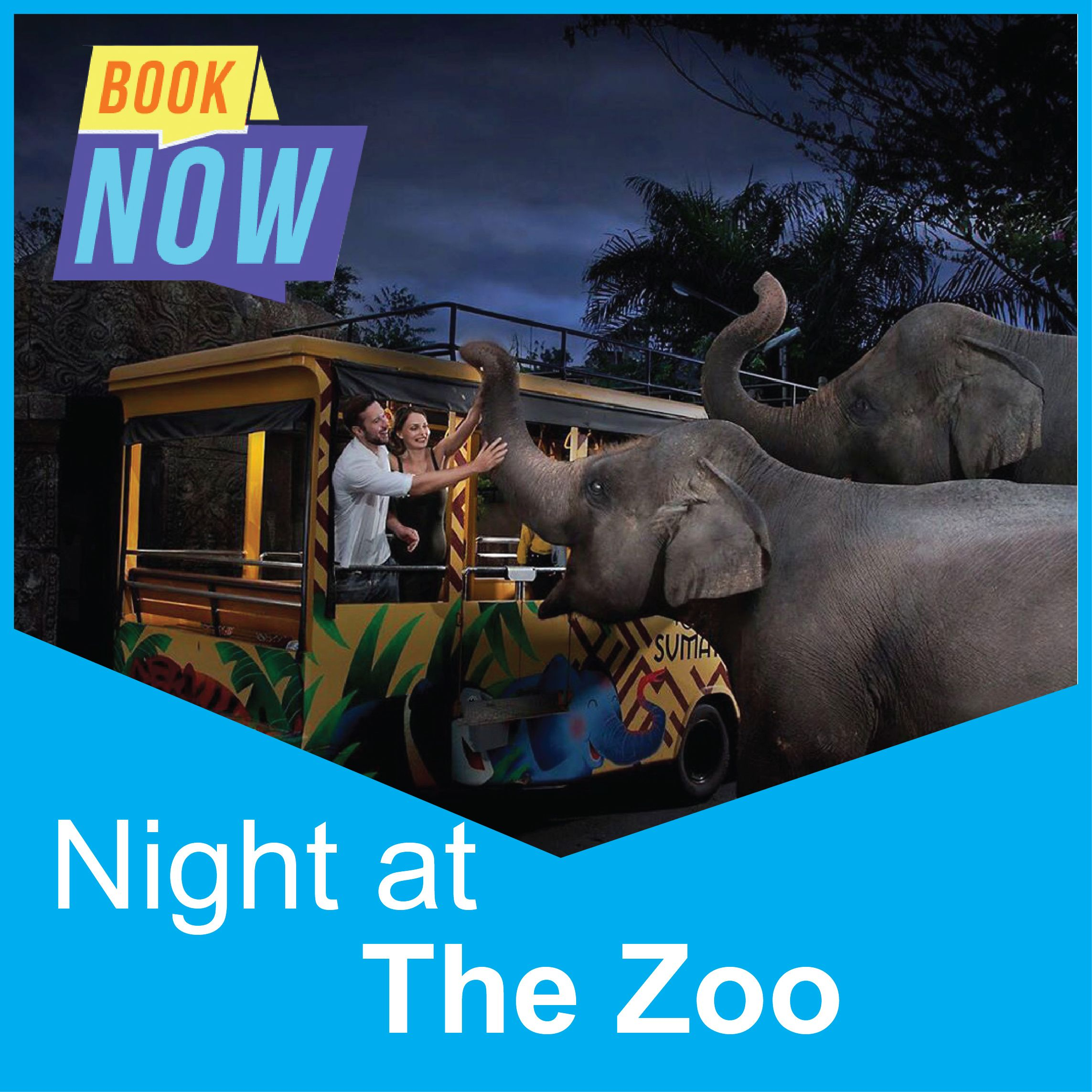 Night at The Zoo